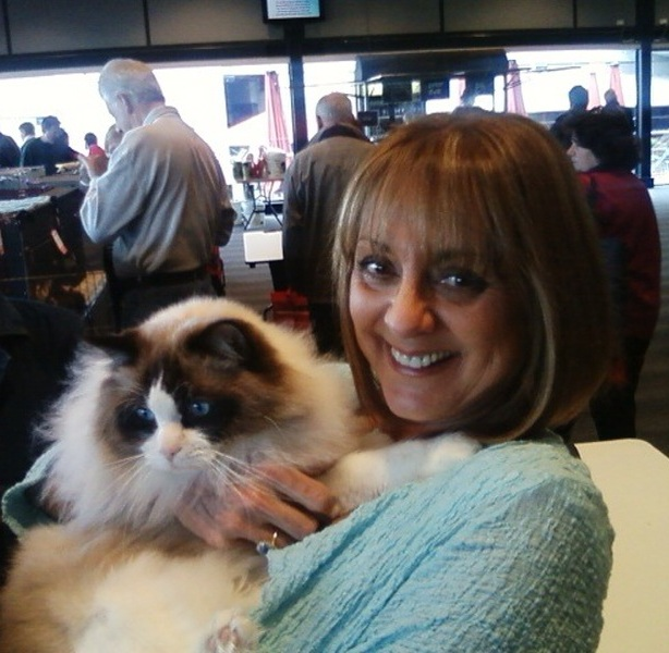 Ravera Ragdoll Cats Kittens Australian Registered